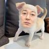 【衝撃】加藤浩次さん、チワワになって吉本残留した理由を説明w