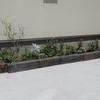 ひと月半経過した夏花壇