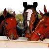 引退馬支援にクラウドファンディングはどうでしょうか?
