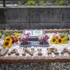 バニラちゃんのお墓 お写真が届きました