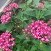 夏の終わり、庭の花壇で満開の花たち。花言葉を添えて…。