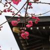 お花見会と神社見学会のお知らせ
