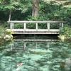 ちょっと岐阜 話題の「モネの池」に行ってみた!