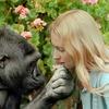 【追悼】手話で会話するゴリラ「ココ」(1971~2018) 人と動物との相互理解のきっかけに