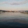 清水 折戸新場所 紀州釣り 海鵜との闘い