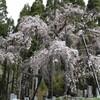 観桜ドライブ(長野県高山村へ)