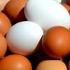 毎日たった1個の卵だけでダイエットできるし健康にもなれる