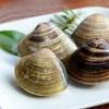 ビタミンB12の効果・食材・レシピ|肩こり解消ために積極的にとりたい栄養素②