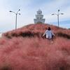 済州島(チェジュ島)フォトスポット #ピンクミューリーの咲く「済州ハーブ園」