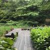 NO密で紫陽花を楽しめる!東京の無料穴場スポット【御殿山庭園】