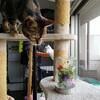 猫飼いの花の飾り方&モニター生活