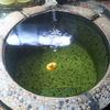 新潟の名湯。