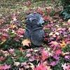 徳川家康公ゆかりの古寺「圓光寺」の洛北最古の池の水面に浮かぶ美しい紅葉