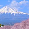 富士山と桜を求めて(2)潤井川の龍巌淵