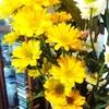 スプレー菊 今週の花~~~ 偶然だけど!