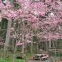 畑を片づけてラズベリーを植える