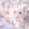 Spring in Okayama