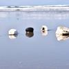 海辺の清掃「ビーチクリーン」。きれいな海を次世代に。