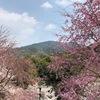 大和国一ノ宮 大神神社のご神体・三輪山ご登拝と桜と