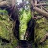 幻想、森と光のタイムスリップ(泉津の切通し)