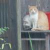 自由猫ダイちゃん、インドア派になる?