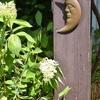 朝の庭にて・・・ノリウツギ