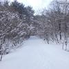 泉ヶ岳(仙台市)で、ゴジュウカラを初撮影! 2/13、その1