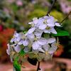 名を知らぬ春の花(散歩写真)