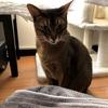 【猫さんと暮らす】今日の猫さんたち