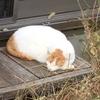 """眠りネコ・座りネコ・"""" 何ですか〜 """"ネコ"""
