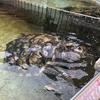 下田海中水族館は、体験型水族館です ~ ほんのよこみち的、下田珍道中記③