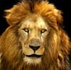 12種類〜60種類の動物占いの危険性について。