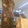 DIY好きの一般人が丸太から木を買ってみました その1