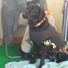 盲導犬のデモンストレーションをみて、寄付やボランティアについて考えてみた