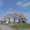 手取川「三本桜」