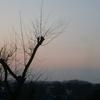 20140403朝の空