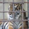 久しぶり東山動植物園