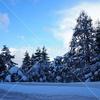 雪 冬木立
