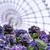 10年後の景色を見るには今の景色を覚えておけ ~富士葵 2nd Solo Live シンビジウム ライブレポート?~