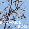 柴犬せんべい、春の訪れも華麗にスルー!『花よりだんごだわん』