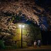 名城公園の夜桜を見てきた