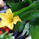 九州産無農薬新鮮野菜でスピンオフを目指す印刷会社の営業マン【Qvege】九州ちくほう野菜
