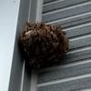 浜松市でサッシ部分に巣をつくる蜂の巣を駆除してきました!