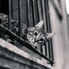【猫との対話#3】人生の目的って一体何!?