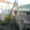 植木撤去1−2(カエデその他、雑木の切断と引き抜き)