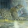 2017年8月30日 天王寺動物園で撮った動物たちの写真