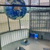 【Miraikan】お台場 日本未来科学館で宇宙ステーション内とスーパーカミオカンデに感動した【お得情報つき】