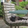 9月25日 足立区弘道の猫さま公園から西新井の猫さま とその情景