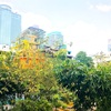 【バンコク生活】タイ・常夏の国・季節の楽しみ方