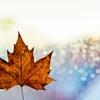 自然が授ける叡智と運、不自然がくれる便利さ。